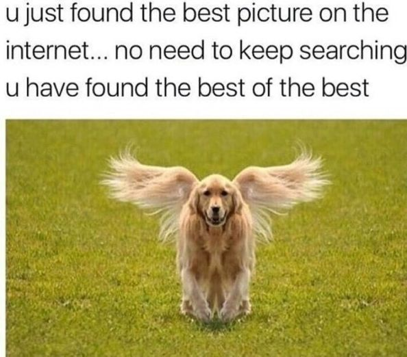 50 Funny & Cute Dog Pictures #DogCare