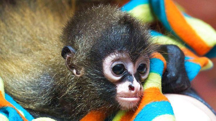 Animal Rescue Center - KILROY