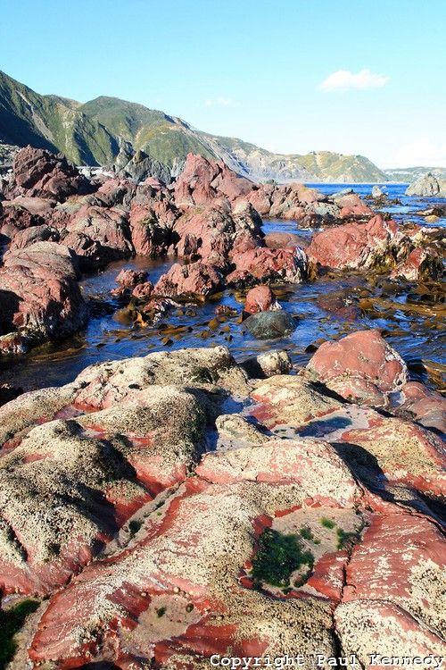 Red Rocks Reserve, South Coast of Wellington, New Zealand Intertidal
