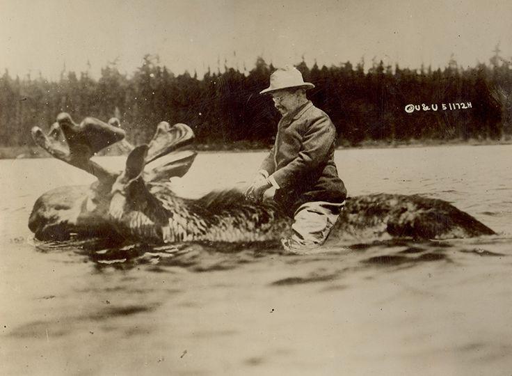 写真少年漂流記: セオドア・ルーズベルト大統領はムースに乗っていなかった Did Theodore Roosevelt Ride A Moose? Courtesy of the Houghton Library