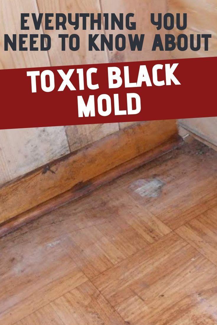 a15826bd9807e60fc57f3541c8de1e63 - How To Get Rid Of Red Mold In Bathroom