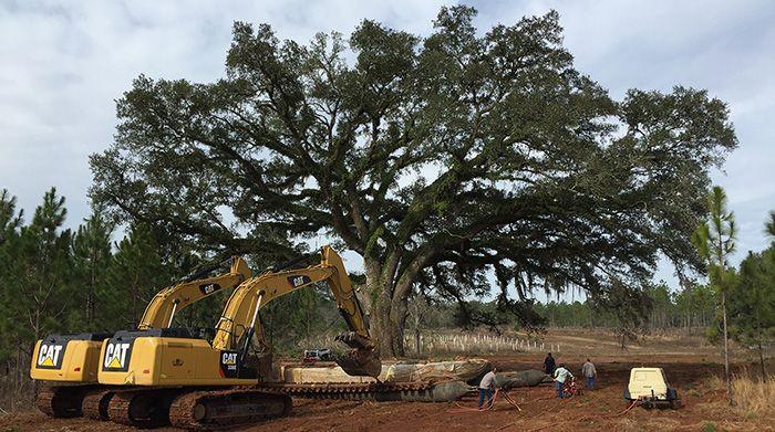 large tree transplanting
