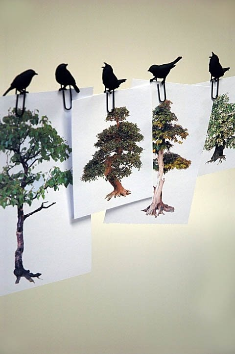 Tales and whispers from the woods: Clinging black birds