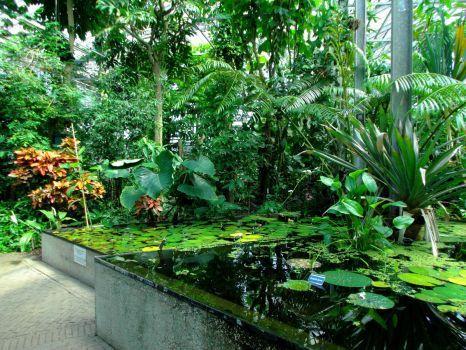 In de tropisch kas Botanische tuin Utrecht (88 pieces)
