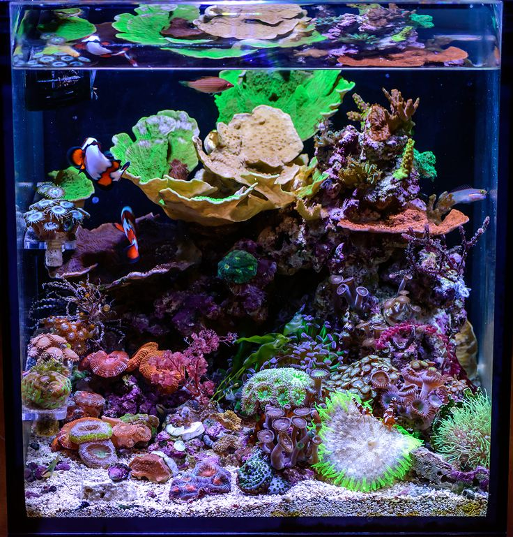 Congratulations to community member teenyreef and his 10 gallon reef aquarium for being selected for our August Reef Profile! This nano reef aquarium i...