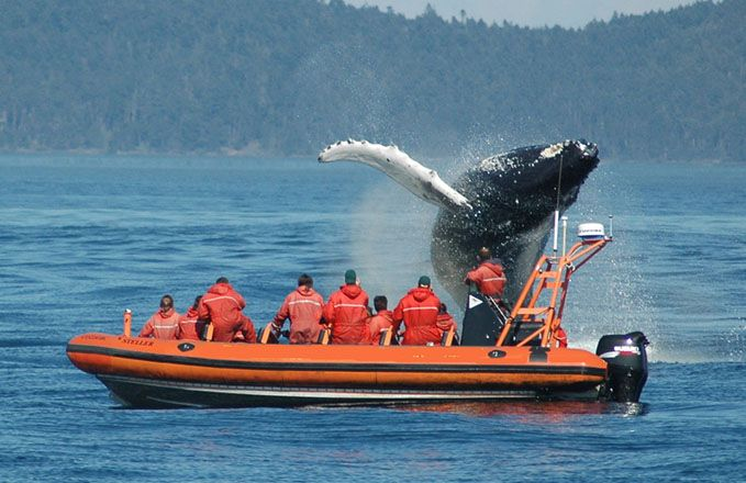 Whale watching - Victoria, BC