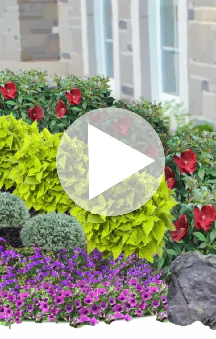 P. Allen Smith shows you how to design a beautiful landscape bed. Very helpful.