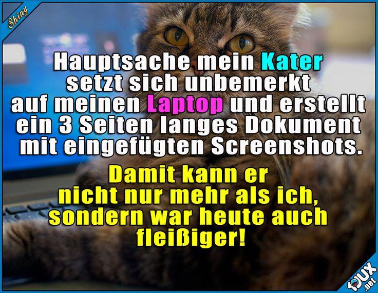 Vielleicht sollte er lieber das Studium machen ^^'  Lustige Sprüche #Humor #1jux #Sprüche #Jodel #lustigeSprüche #Studium #Studentenleben #Studentlife #studieren #Katze #Katzen #Kater #lustig