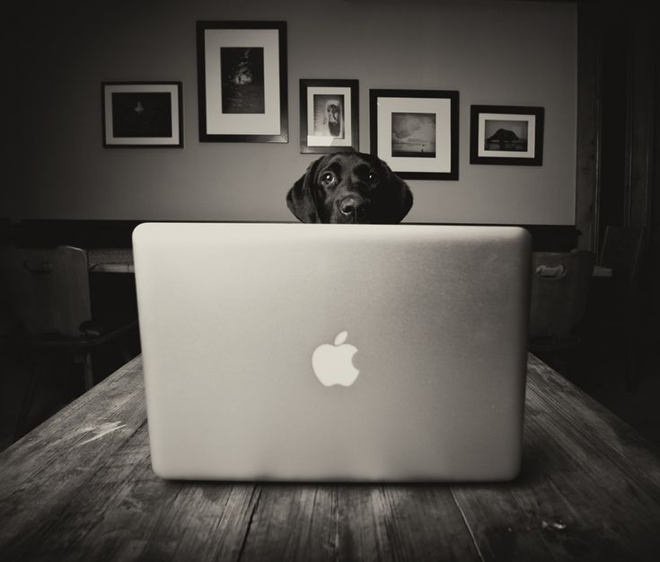 Macbook Lab: Animal Pictures, Apples Macintosh, Best Friends, Macbook Labs, Apples Products, Funnies Things, Cool Photo, Mac Dogs, Black Labs