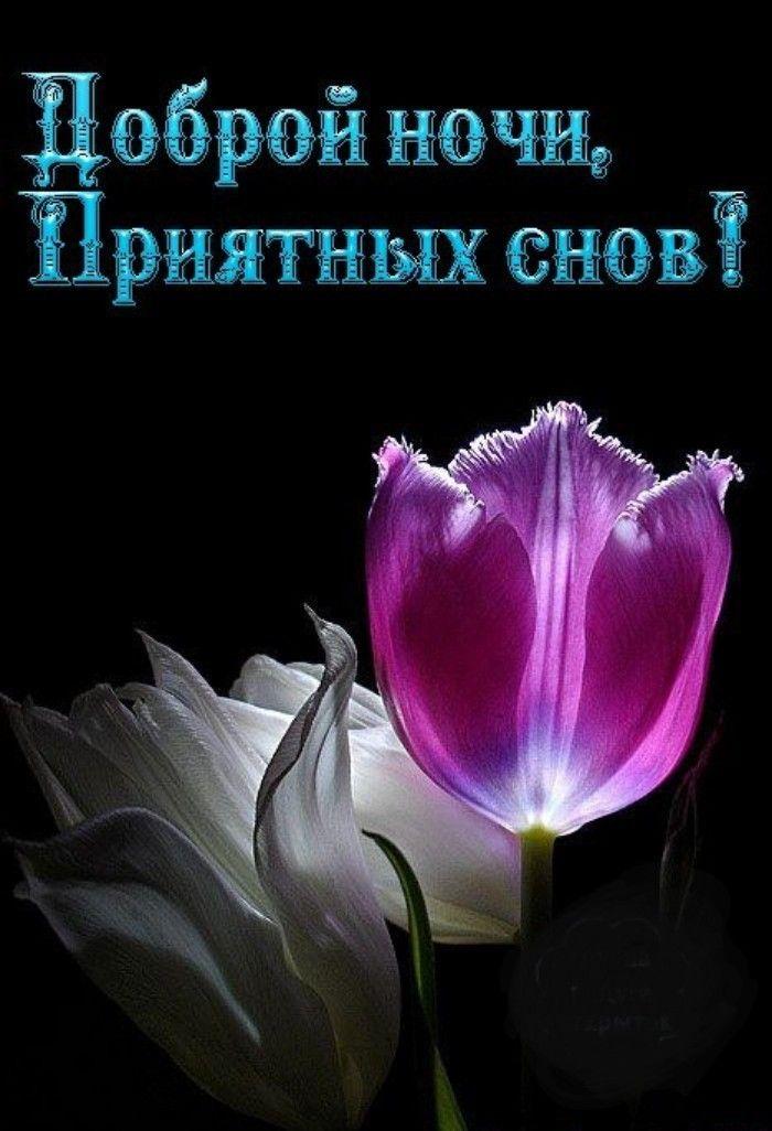 Добрый вечер хорошего сна картинки