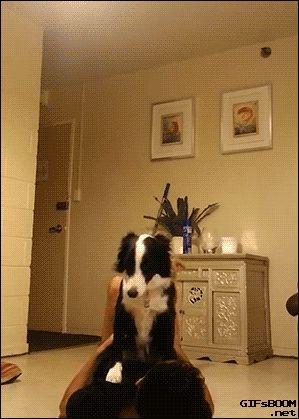 Cães Execute Truque Balancing impressionante com seu ser humano. [Video]