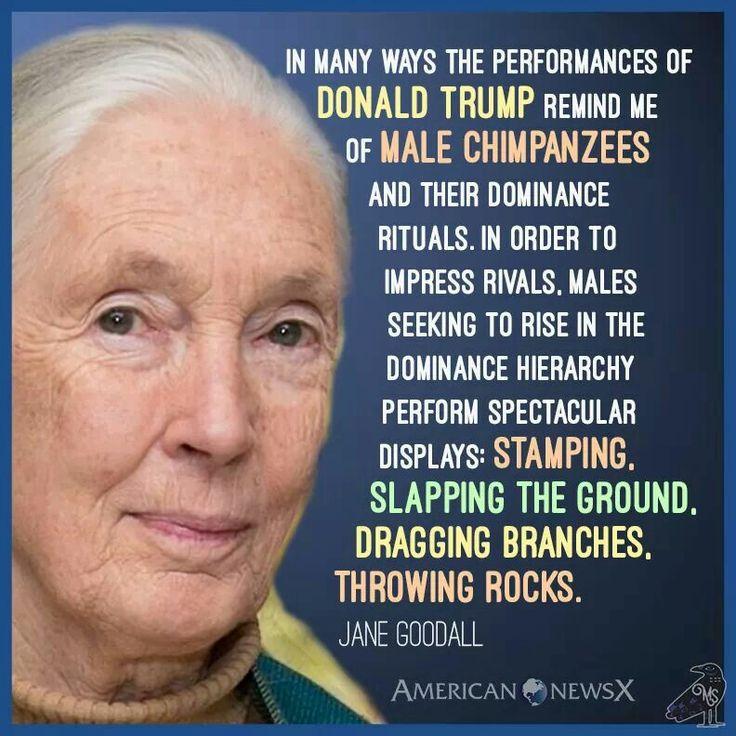 Jane Goodall Quotes: De 25+ Bedste Idéer Inden For Jane Goodall På Pinterest