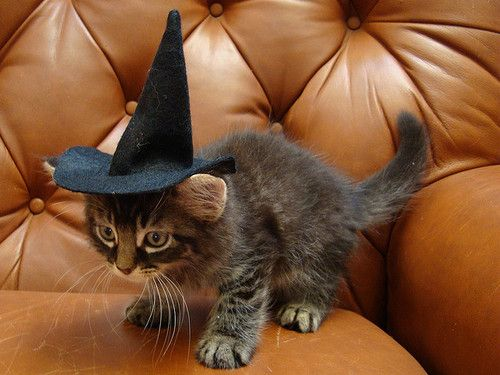 Halloween kittyCat, Harrypotter, Witches Hats, Baby Pictures, Kittens, Harry Potter Humor, Kitty, Baby Photos, Happy Halloween