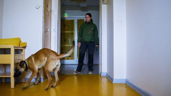 """Homekoiran tekemä löytö on vasta ensi askel – """"Koiran ilmaisut vaativat aina jatkotutkimuksia"""" – Video"""