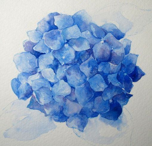 Paso a Paso de la acuarela: Cómo pintar un Hydrangea azul   Artista Diario   bloglovin '