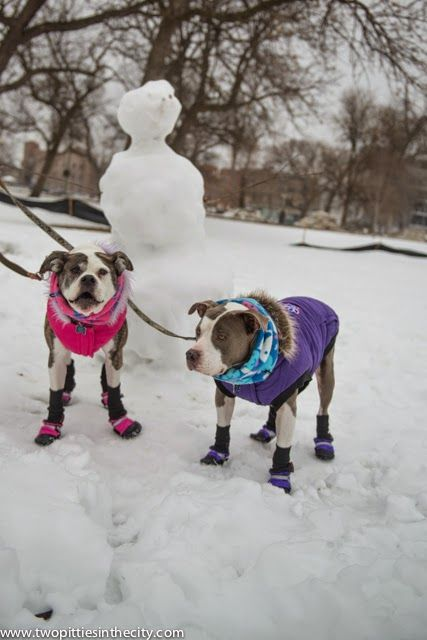 Two Pitties in the City