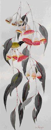 Helen Fitzgerald 'Eucalyptus caesia silver princess' watercolour