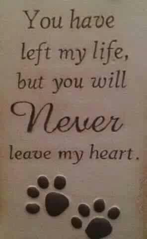For my Jet <3 #RainbowBridge #DogMom #DogDad #AdoptDontShop #DogLover #LoveDogs #RescueDog #ShelterDog