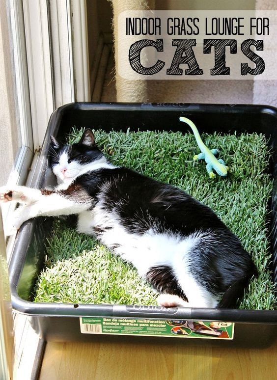 Make a grass lounge for your indoor cat with a cement mixing pan and a sheet of sod from your local hardware store. (Only $10 for the tray and sod, new sod costs about $2.50 in our area and lasts up to 5 days indoors.)