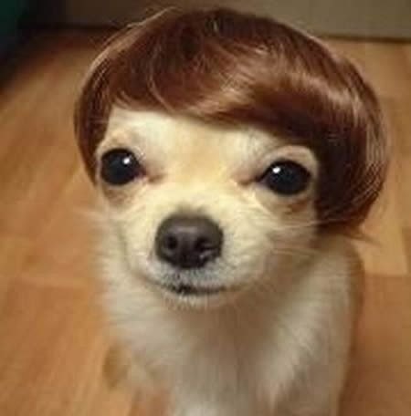 It's been a hard day's night  And I've been working like a dog!! jajaja #BEATLESHair Piece, Justin Bieber, Puppies, Justinbieber, Funny Dogs, Wigs, So Funny, Little Dogs, Animal