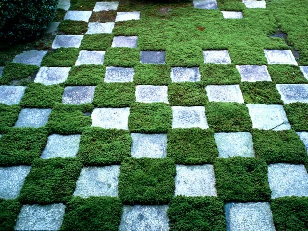 Make a checkerboard patio with patio pavers and creeping thyme >> http://www.diynetwork.com/how-to/outdoors/gardening/making-a-checkerboard-patio-garden?soc=pinterest
