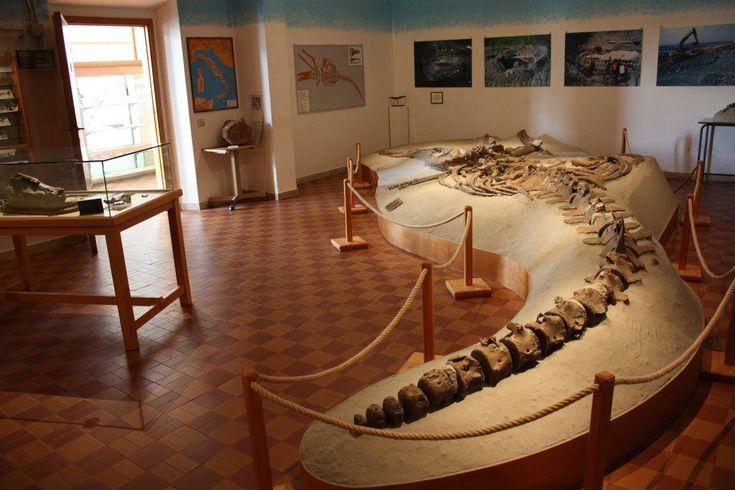 Notte della Cultura, la Toscana milioni di anni fa al Gamps di Scandicci - http://www.toscananews.net/home/notte-cultura-toscana-milioni-anni-fa-gamps-scandicci/