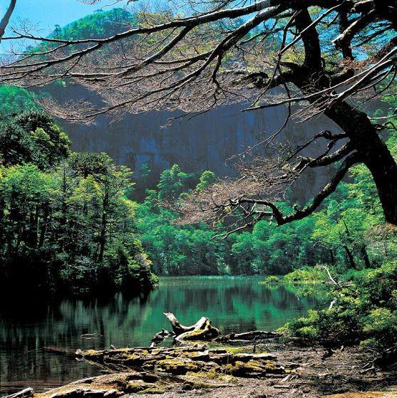 Parque Nacional Huerquehue