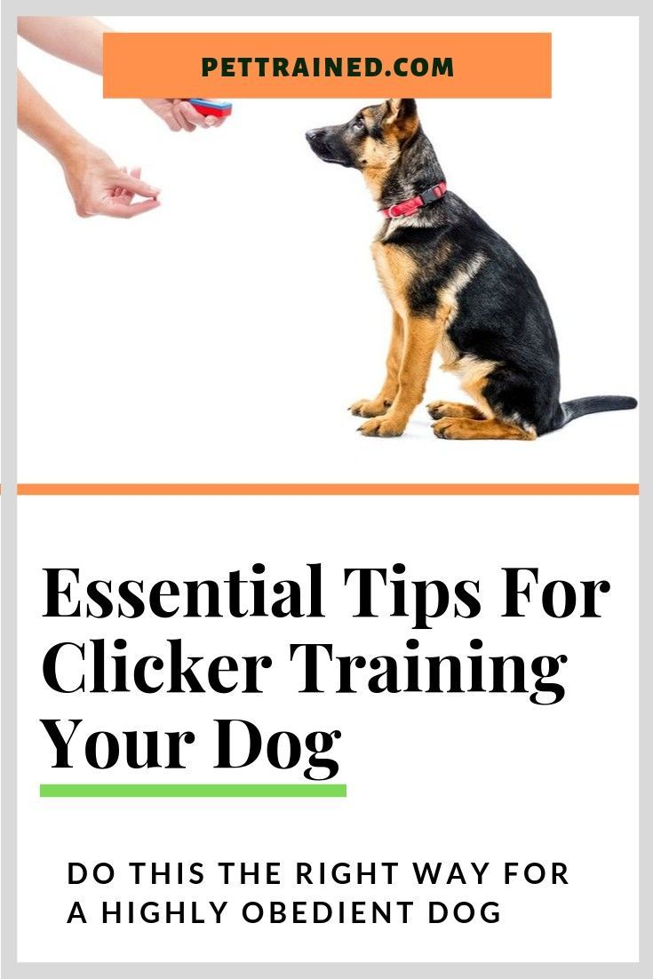 Get The Secret Of Clicker Training For Dogs Here Www Pettrained