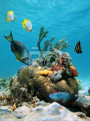 Fototapeta powierzchni wody i morskiego życia