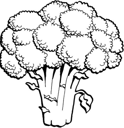 D Line Drawings Vegetables : Images about food drink and cooking coloring pages on