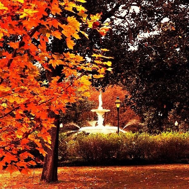 Places To Visit In The Fall In Usa: 17 Best Images About Fall In Savannah On Pinterest