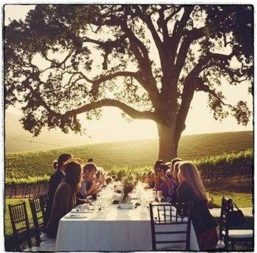 Dinner party under a tree. Add this to the list of reasons I need to live on a vineyard