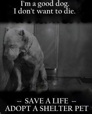 I agree, there are so many homeless and forgotten dogs out there who could bring joy to a family!