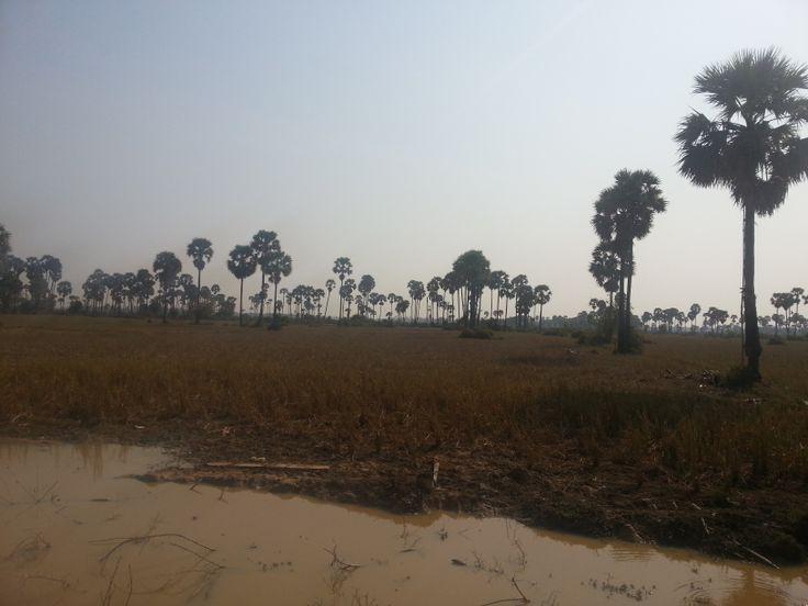 Just a rural landscape