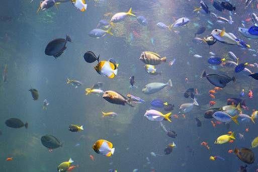 Las 25 mejores ideas sobre peces de agua dulce en for Mejores peces agua fria
