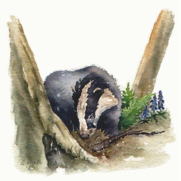 Aquarel schets Woodland Badger teruggebracht door GillianMcMurray