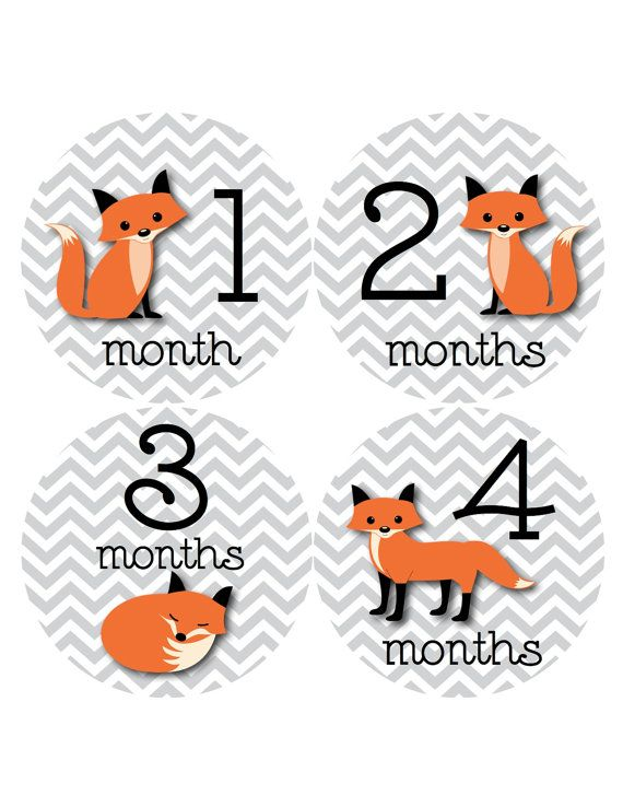 Fox Baby Month Stickers Monthly Baby Stickers Fox by BuddhaBellies
