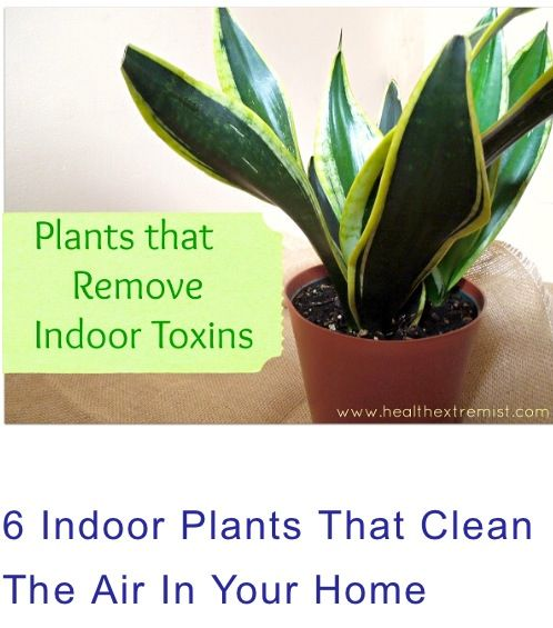 6 Indoor Plants That Clean The Air:  1. Aloe  2. Spider Plant (Chlorophytum Comosum)  3. English Ivy (Hedera Helix)       4. Peace Lily (Spathiphyllum 'Mauna Loa')      5. Snake Plant Or Mother-In-Law's Tongue (Sansevieria Trifasciata'Laurentii')  6. Rubber Plant (Ficus Elastica)  excel at removing  toxins from the air, particularly formaldehyde.