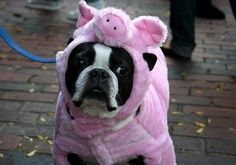 National Dress Up Your Pet Day.