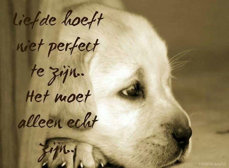 Citaten Over Honden : Citaten over honden beste ideeën teksten op