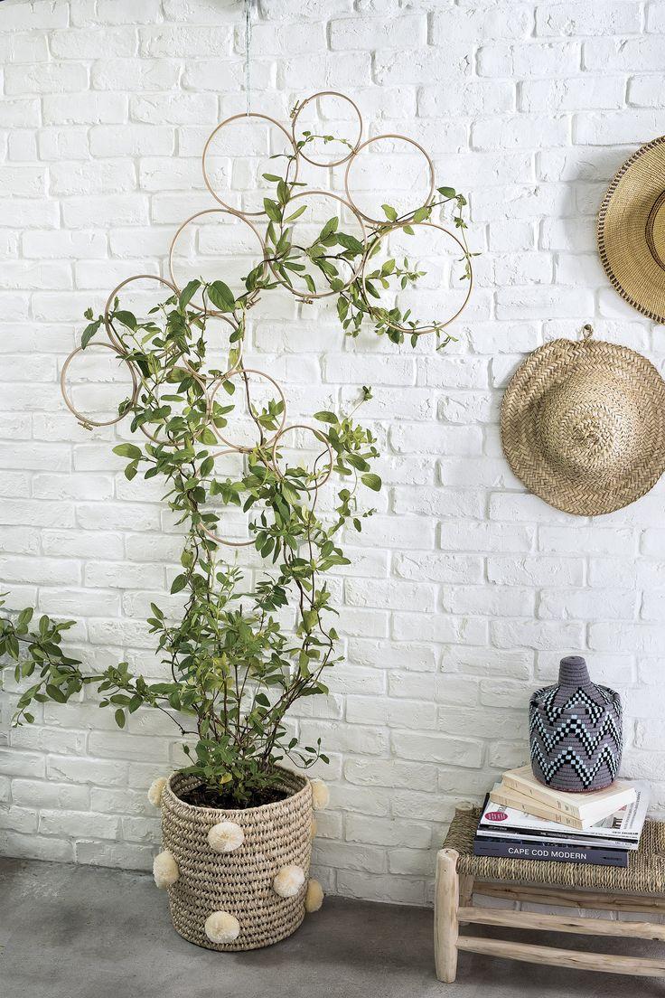 25 melhores ideias sobre plante grimpante no pinterest for Plante decorative jardin