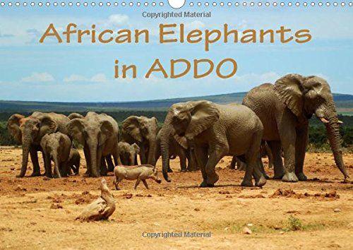African Elephants in ADDO (Wall Calendar 2016 DIN A3 Landscape): Beautiful photographs of wild elephants in the Addo National Elephant Park/South ... calendar, 14 pages) (Calvendo Animals) von Anke van Wyk http://www.amazon.de/dp/1325053759/ref=cm_sw_r_pi_dp_7uU9ub1DGQSNT