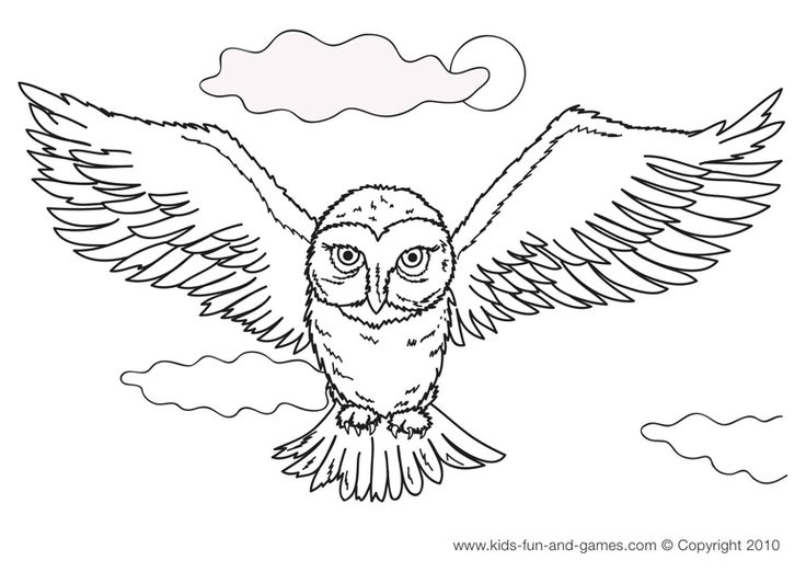 owl colouring pages picture 16 animal print owl coloring pages for adults free