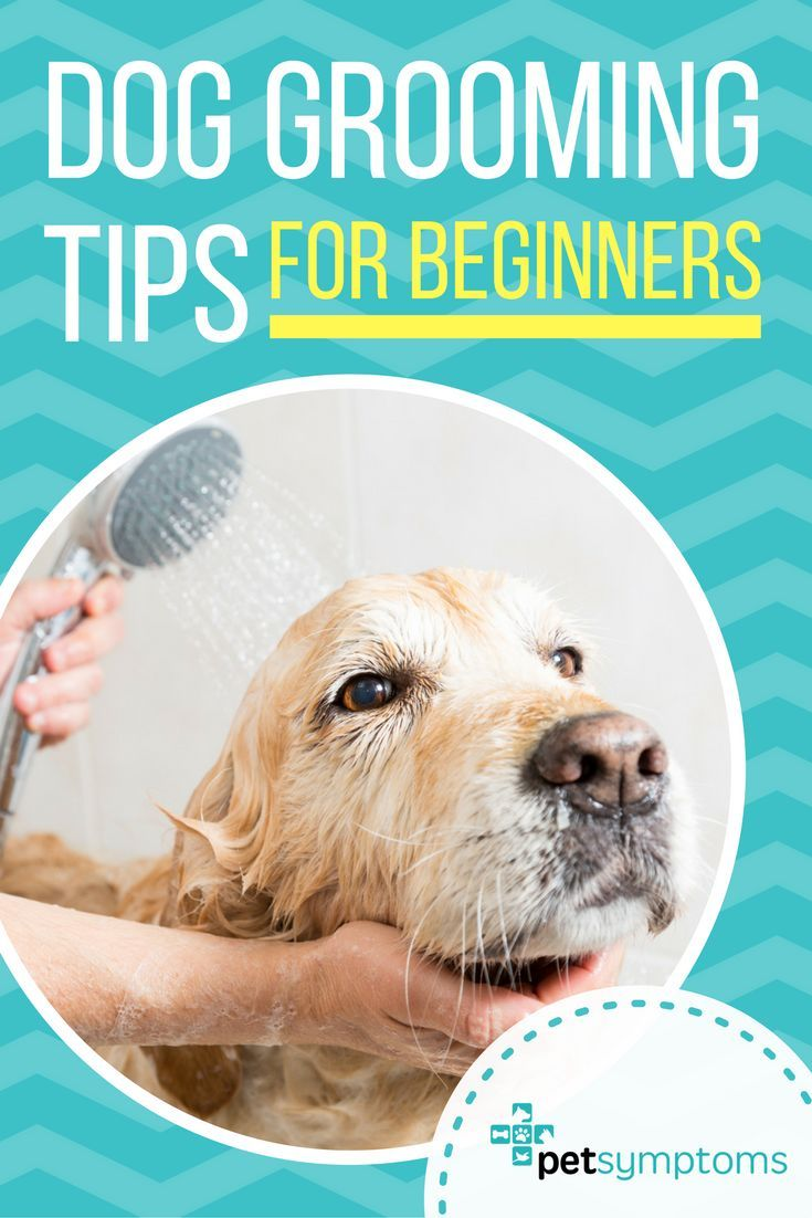 Dog Grooming Tips For Poodle Owners