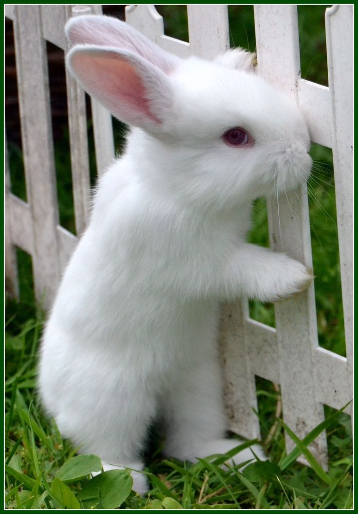 Beautiful white Bunny