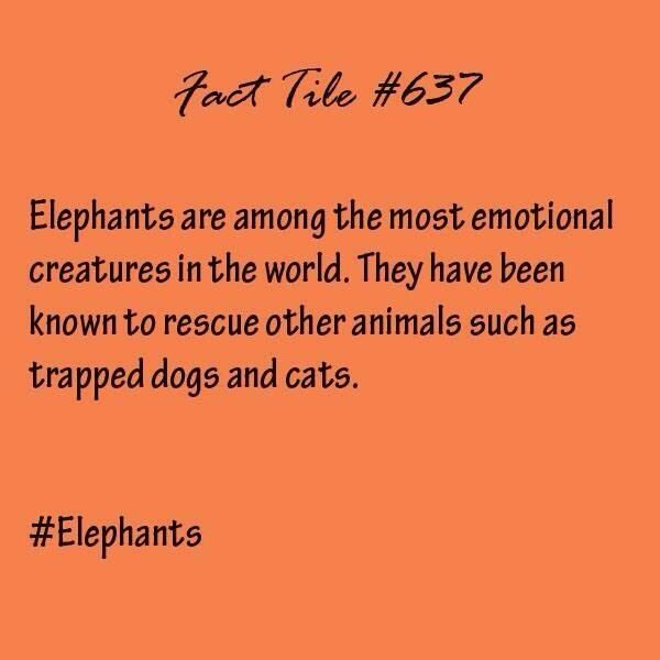 #elephants fact