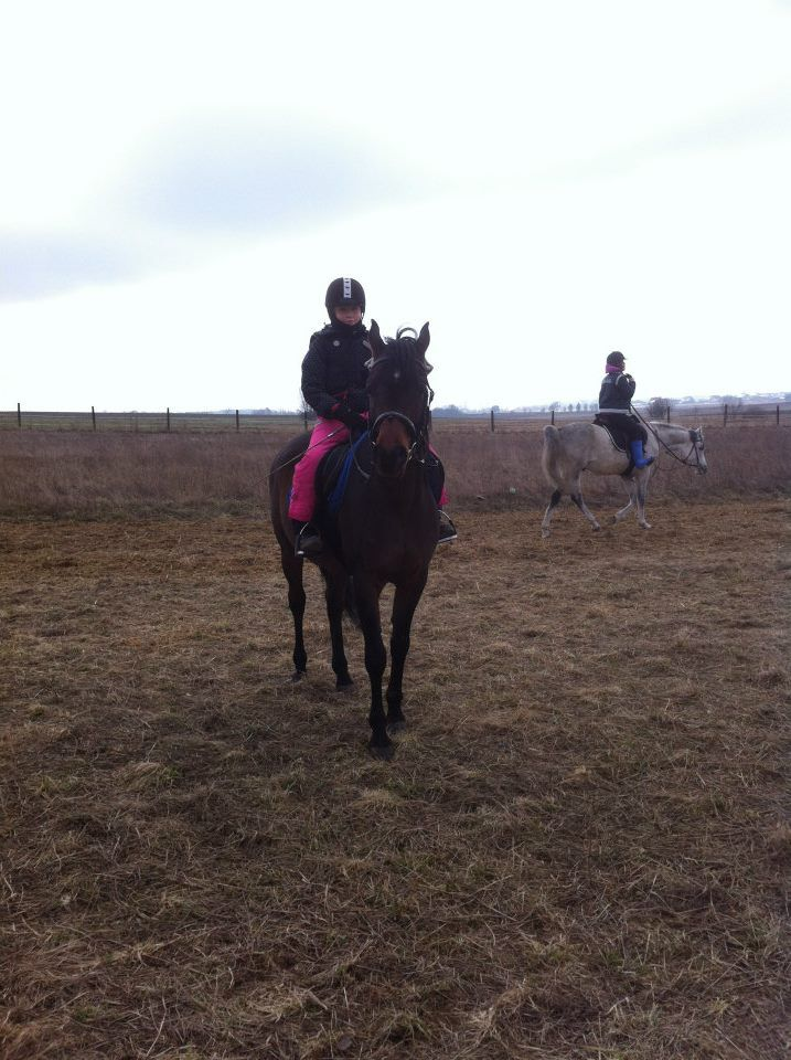 Girl, Child, Horses, Arabian Horse, Staillon, Fun,