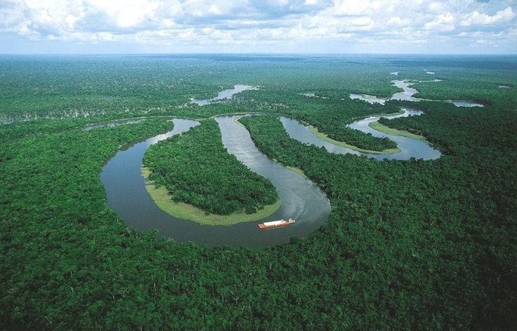amazonian forest interesting facts