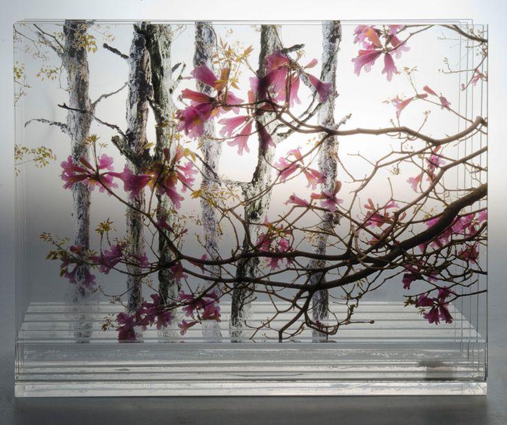 Palo Borracho- caja 3d- fotografía multicapa- Laura Messing