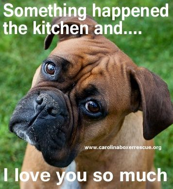 Awww, sweet baby, itll be | http://justforgagscollections.blogspot.com ~ re-pinned by boxerdogchecks.com boxer-themed stationery, gifts, and home decor.